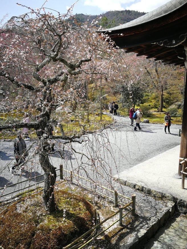 Tenryu-ji temple - Kyoto 4 giorni