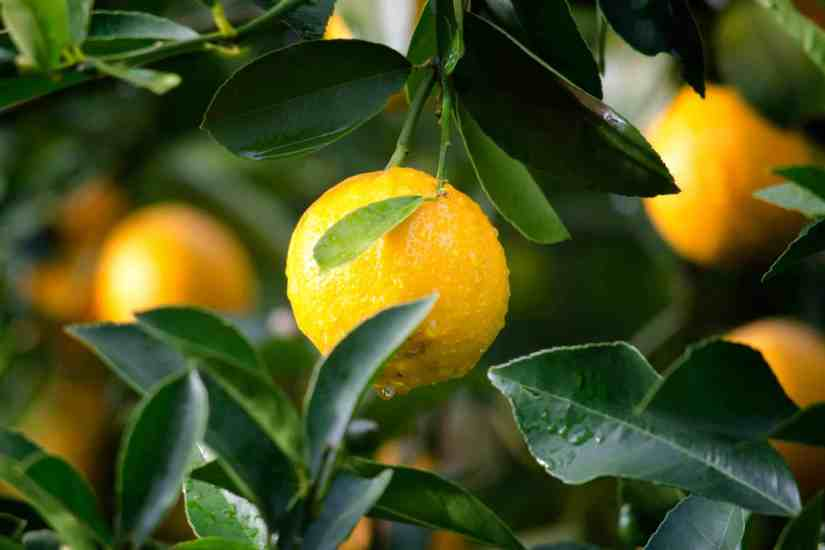 lemon home remedies for acne
