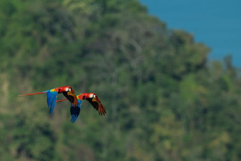 Macawcountour