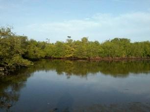low tide (2)