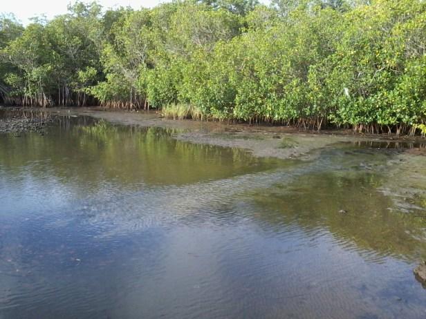 low tide (6)