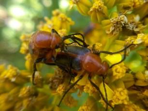 bug love (2)