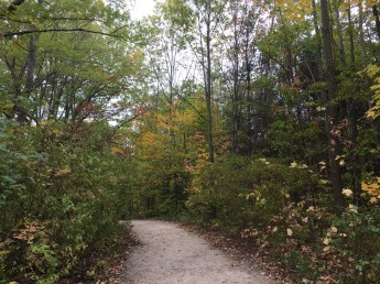 Don't think of Toronto as just another northeast North American city. The absolute best time to visit Toronto is in the fall when the trees are a-changing.