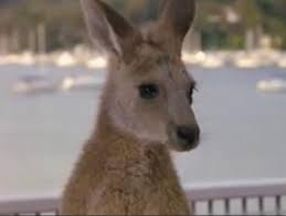 In Sydney, you could see a potato chip eating kangaroo like this one from the Olsen twin movie, Our Lips Are Sealed.