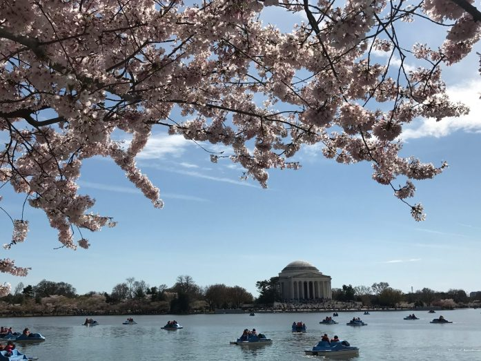 Trying to time a trip to D.C. to see the cherry blossoms in bloom is an almost impossible experience.