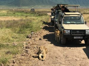 On a budget safari, you can expect knock off Jeeps as your safari vehicle.
