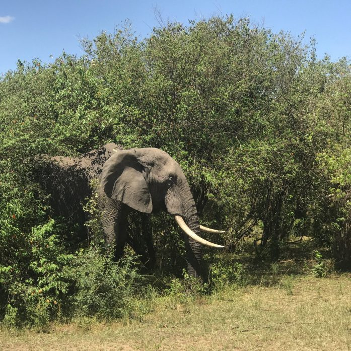 You can spend hours on safari observing wild animals in their natural habitat.