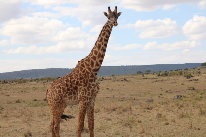 A safari isn't like going to a zoo but you won't know that until you experience it for yourself!