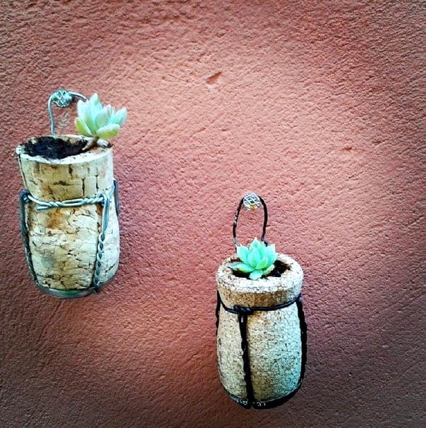 como plantar dentro de rolhas suculentas Como plantar dentro de rolhas   DIY