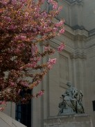 Here's my artsy shot of the blossoms with a statue.