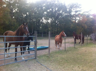 All of the horses at Cheryl's.
