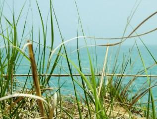 Grass, Sand & Sea