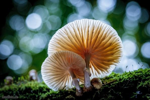 Pilze auf Totholz im Buchenwald .:. 13.10.2013