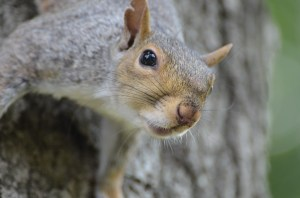 squirrel-1225970_960_720