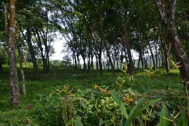 Plantation Villa Resort - Σρι Λάνκα