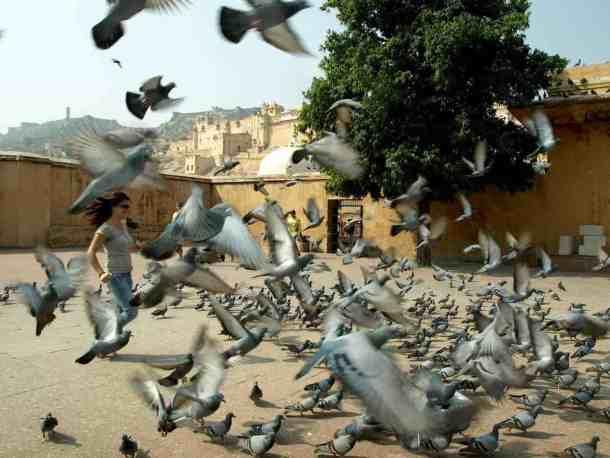 Rajasthan (Jaipur), pigeons in indian square. maninio.com #Rajastanjaipur #Agradelhi