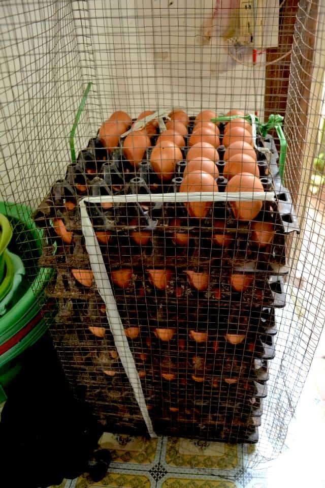 Fresh eggs from the cambodia market- #volunteerinasia #volunteerincambodia maninio.com