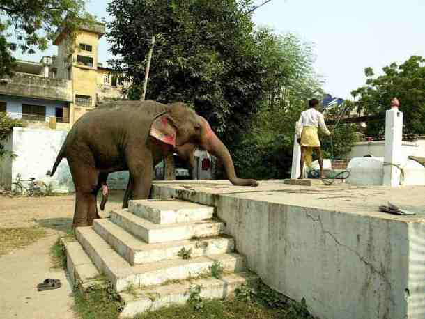 Elephants in Varanasi India. maninio.com
