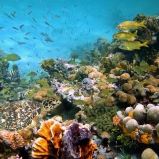 0a334shutterstock_87231943-mercan-kayaligi-yesil-deniz-kaplumbagasi-ve-baliklar