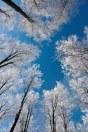 519d5shutterstock_122923492---gokyuzune-uzanan-beyaz-dallar