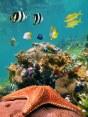 fcb02shutterstock_92143243--Renkli-tropikal-baliklar-ve-on-planda-bir-denizyildizi,-Karayip-denizi,-Meksika