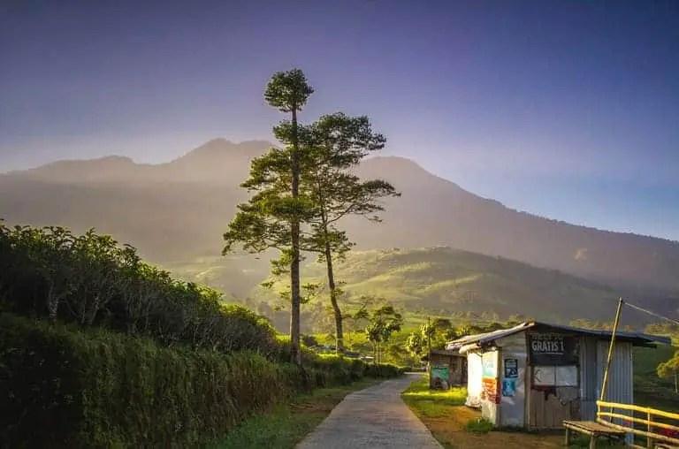 Kebun Teh Kemuning dan Ndoro Dongker Tea House