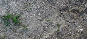'Rodna gruda' (Native soil) is dry.