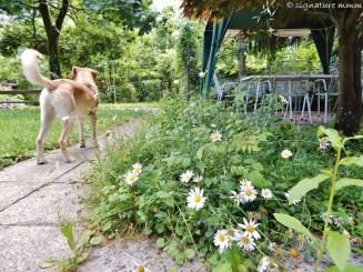 Best garden in Ljubljana Bežigrad.