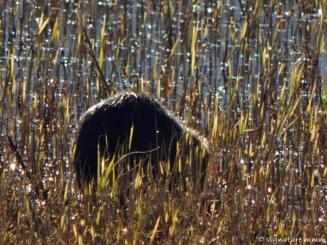 And bye, nutria.