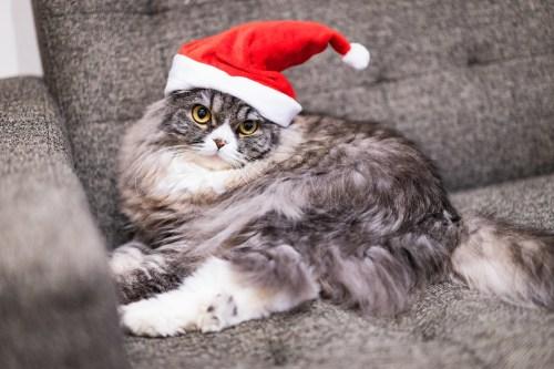 12月イメージサンタ猫