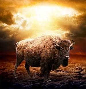 The beast of Revelation 13:11-18 symbolizes America.