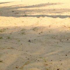 Sandy @ Sentosa Beach, Singapore