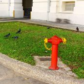 Doves and water hydrant