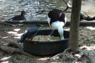 My food!!!… Jurong Bird Park, Singapore
