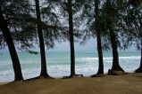 Casuarina trees & Andaman Sea