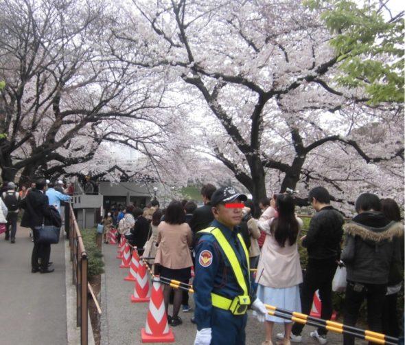 桜の時期の千鳥ヶ淵のボートの行列