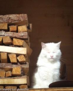 Tannheimer Tal Katze