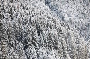 Tannheimer Tal Schneewald