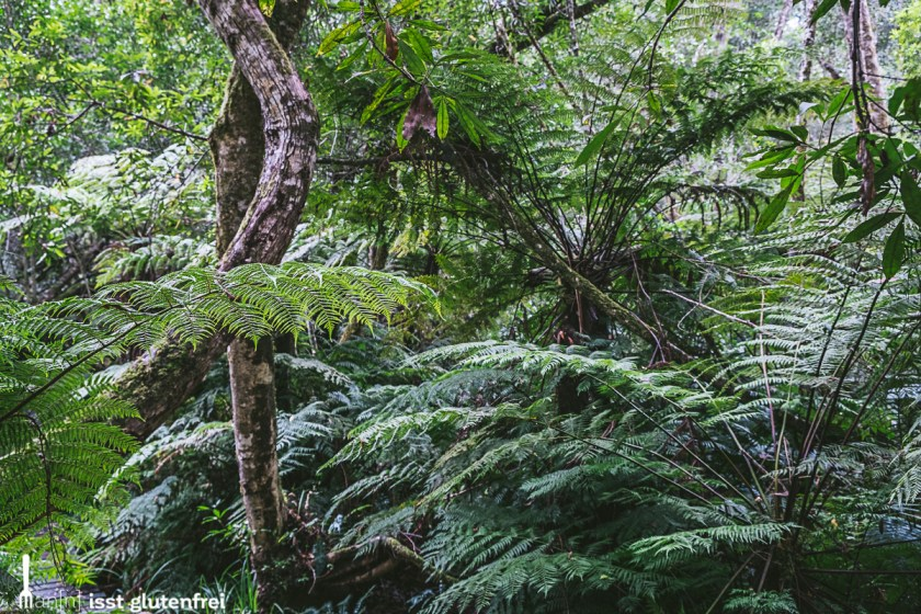 Garden Route Knysna Forest