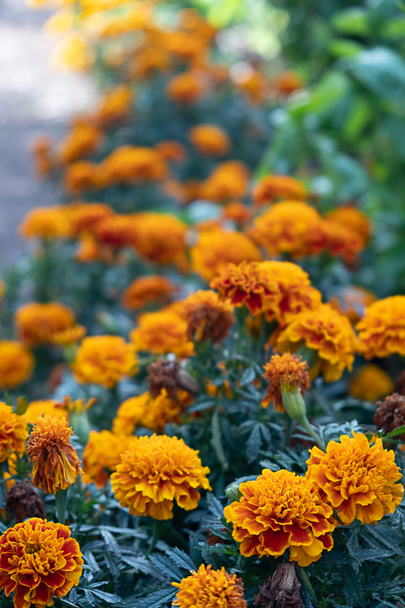 Babylonstoren Cape Dutch Farm Flowers