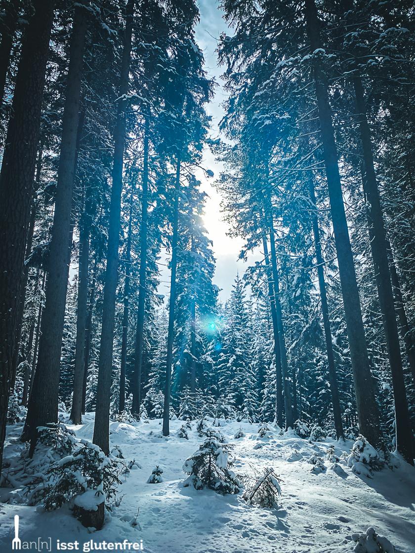 Leutasch Winterwald
