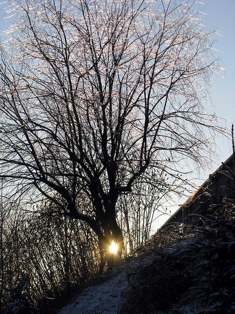 icy tree 2