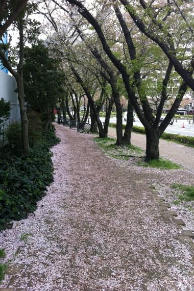 Yokosuka Bike Path (1)