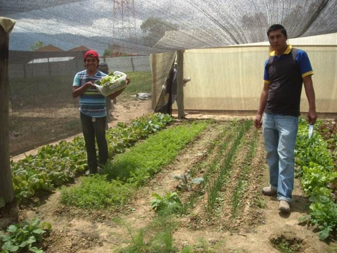 More recent pic from the Demonstration Center - students harvesting their lunch from one of the gardens
