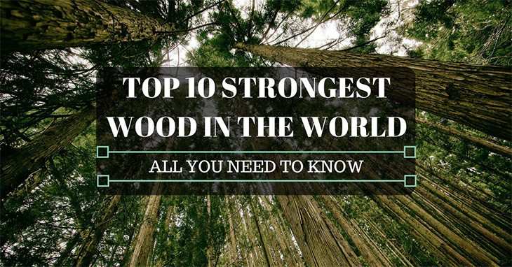 Top 10 strongest wood in the world