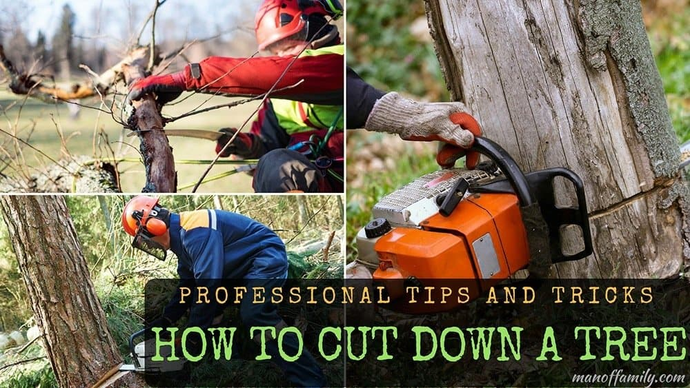 tips in cutting down a tree
