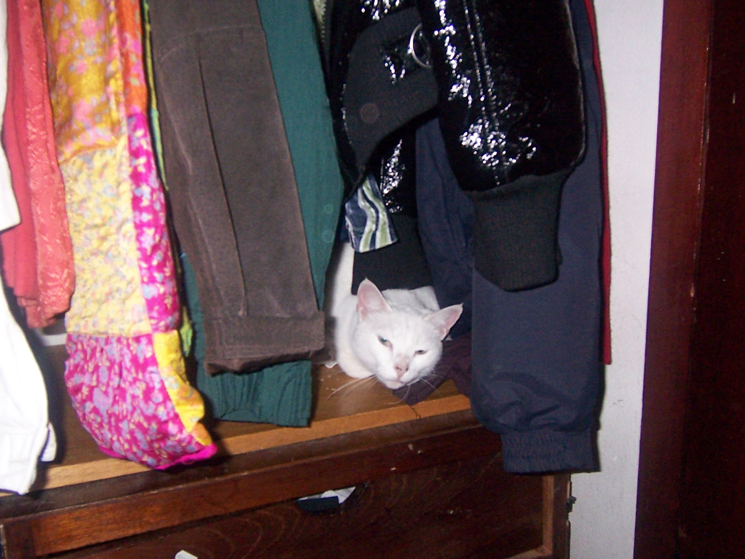 pierce-entre-ropa