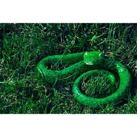 Crotalo verde </br>2011