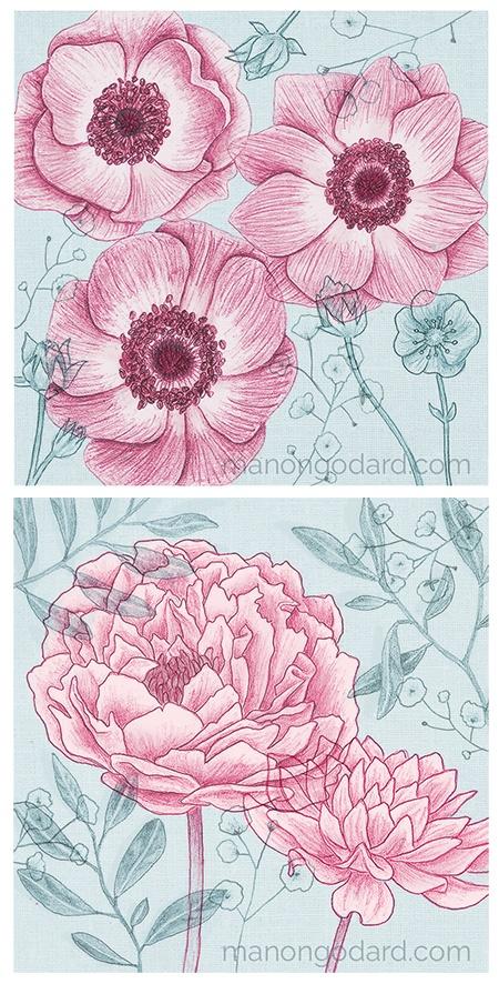 "Duo ""Anémones & Pivoines "" illustrations par Manon Godard"