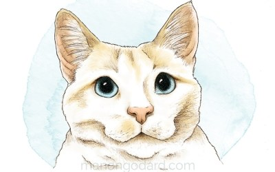 Portrait d'un chat blanc – Dessin au crayon (+ vidéo making-of)